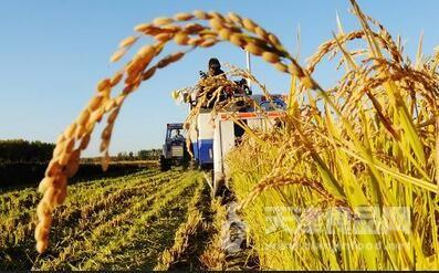 在优化农业生产结构和区域布局方面